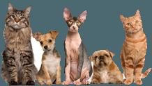 pet safe Pest Control Gold Coast