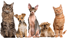 pet safe Pest Control Gold Coast